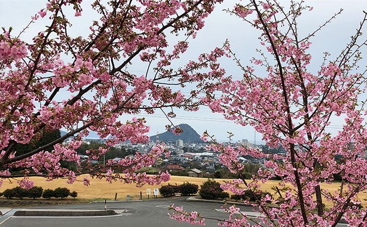 陶芸の村公園より河津桜越しに萩市街を臨む
