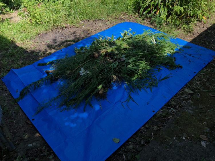 炎天下で1時間半の草むしり