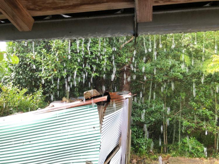 雨樋が機能してない